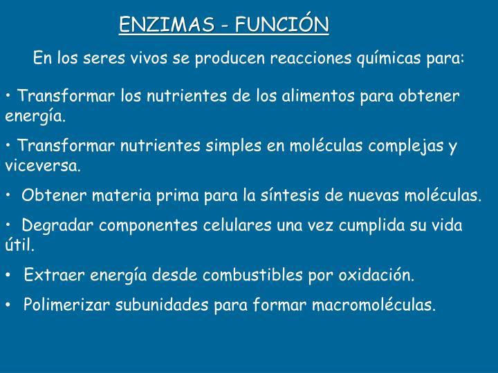 ENZIMAS - FUNCIÓN
