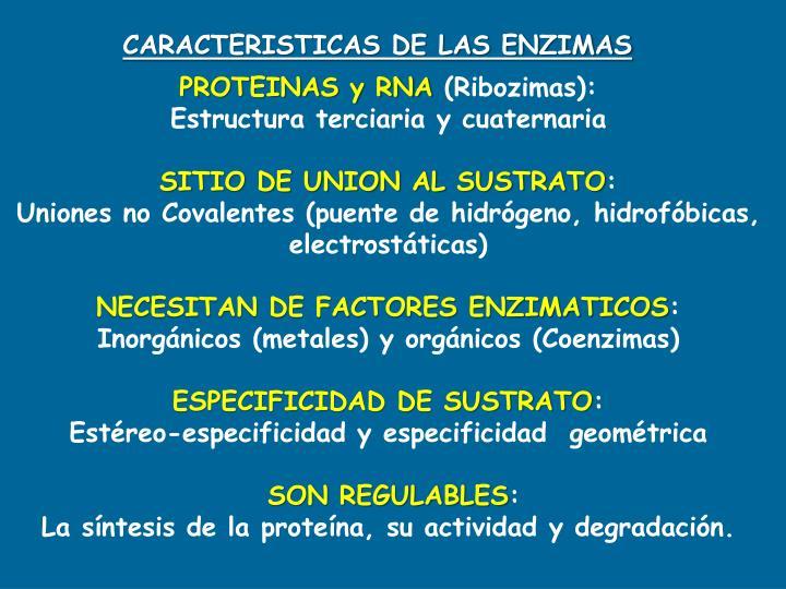 CARACTERISTICAS DE LAS ENZIMAS