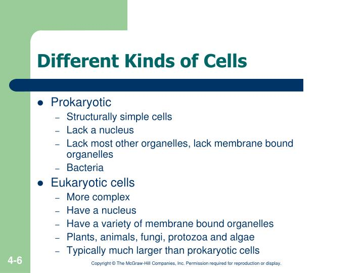 Different Kinds of Cells