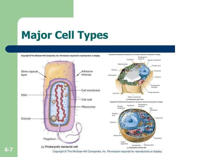 Major Cell Types