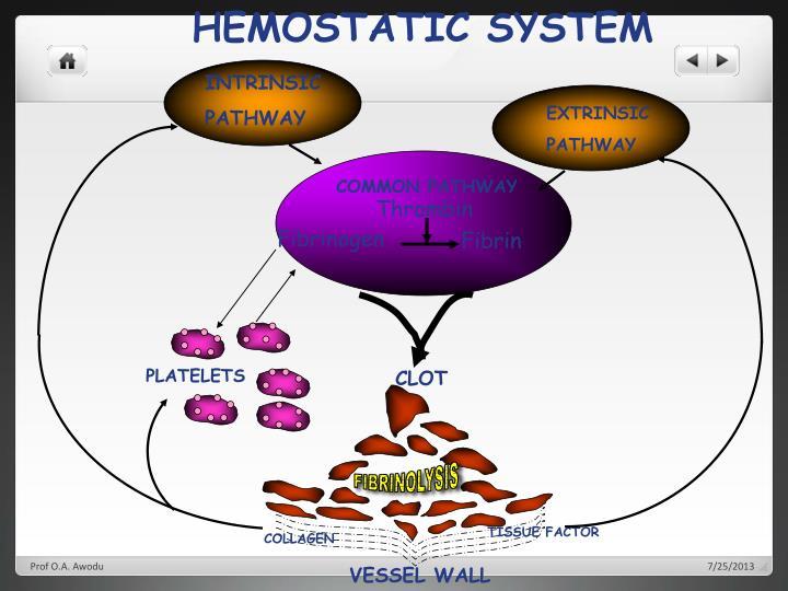 HEMOSTATIC SYSTEM