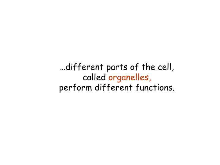 …different parts of the cell,