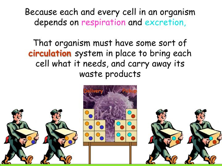 Because each and every cell in an organism depends on