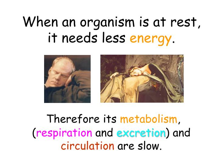 When an organism is at rest, it needs less