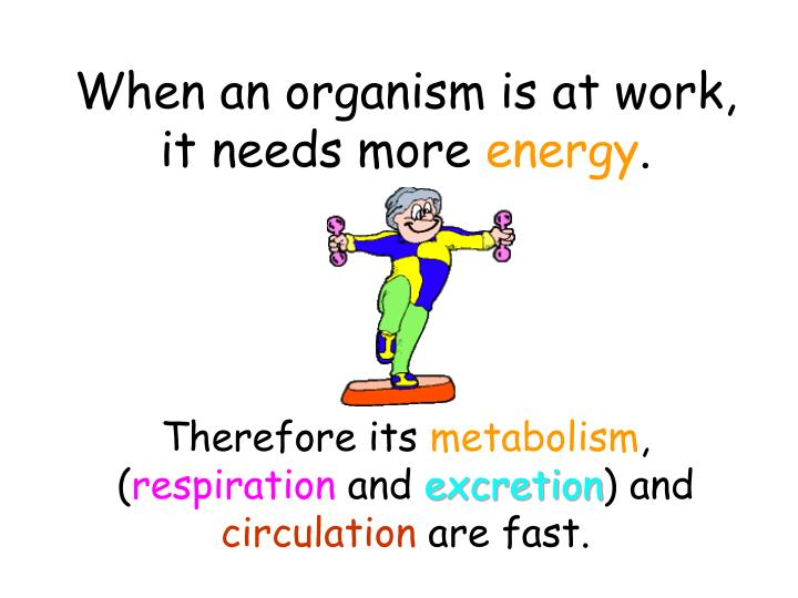When an organism is at work, it needs more