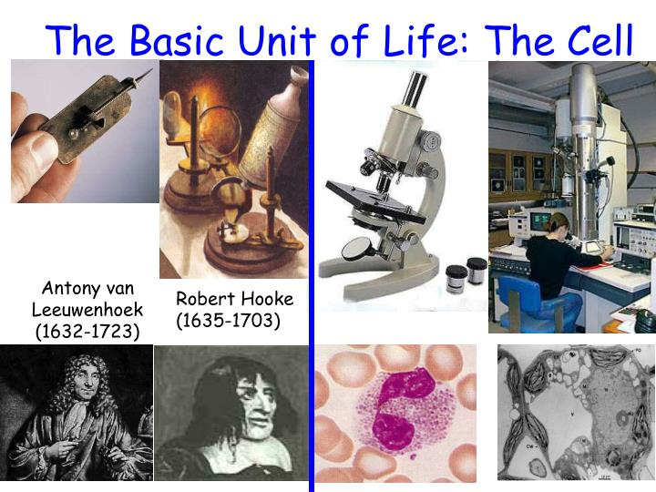The Basic Unit of Life: The Cell