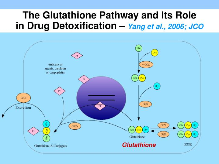The Glutathione Pathway and Its Role