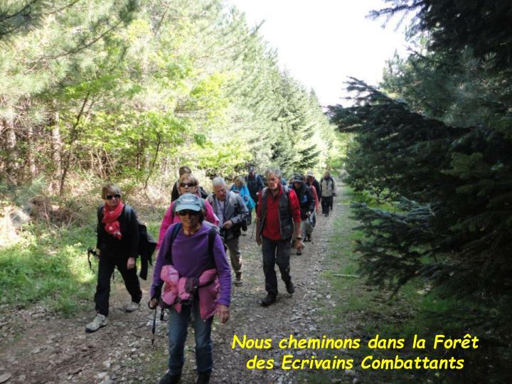 Nous cheminons dans la Forêt des Ecrivains Combattants