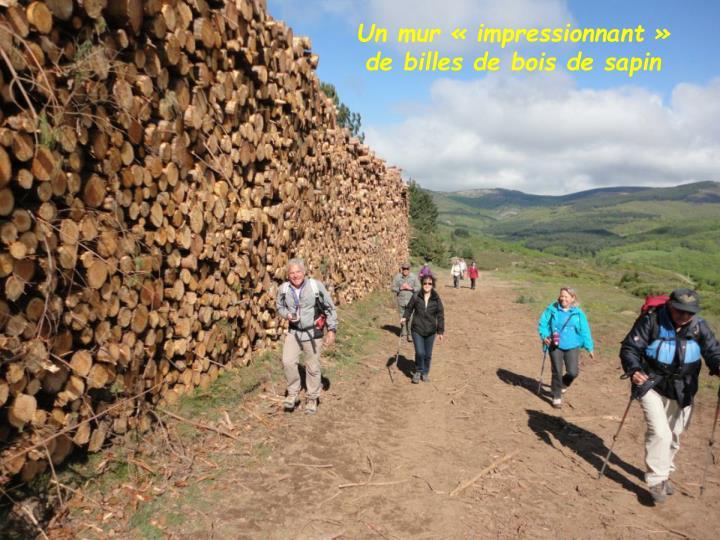 Un mur « impressionnant » de billes de bois de sapin