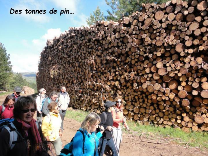 Des tonnes de pin…