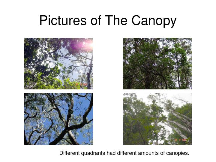 Pictures of The Canopy