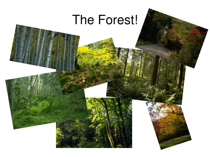 The Forest!