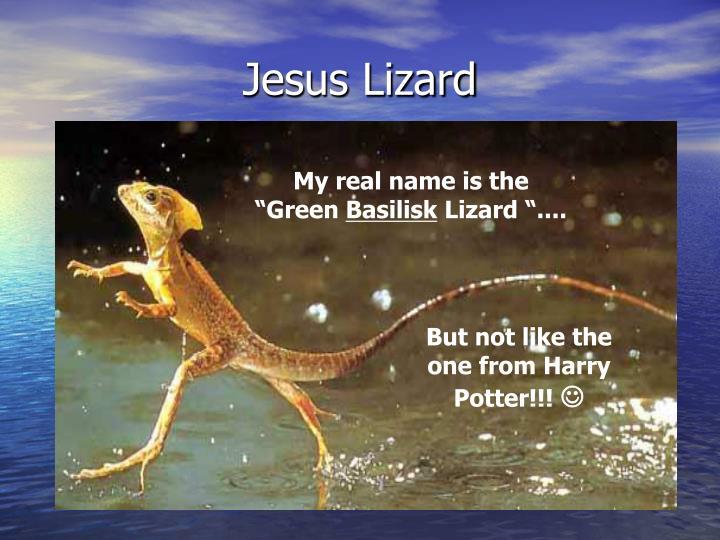Jesus Lizard