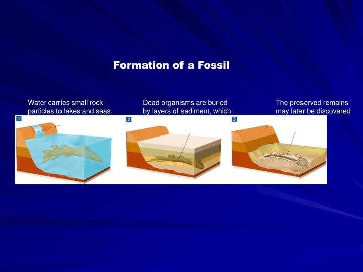 Formation of a Fossil
