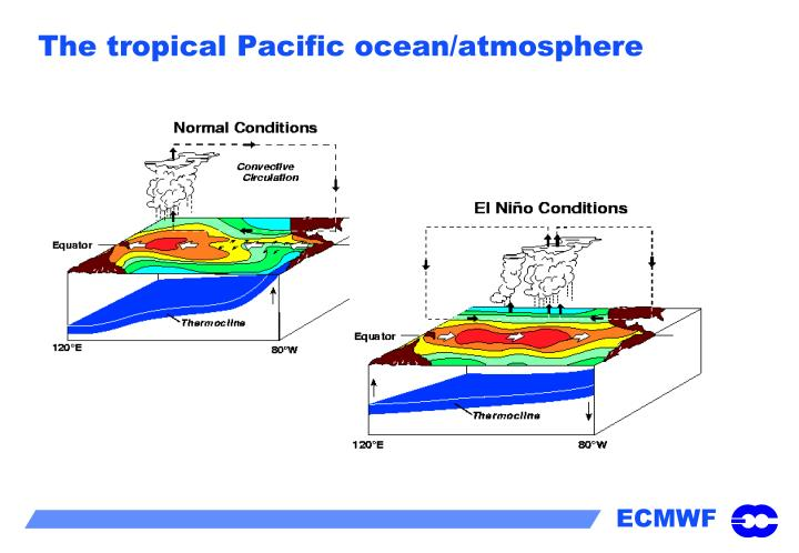 The tropical Pacific ocean/atmosphere