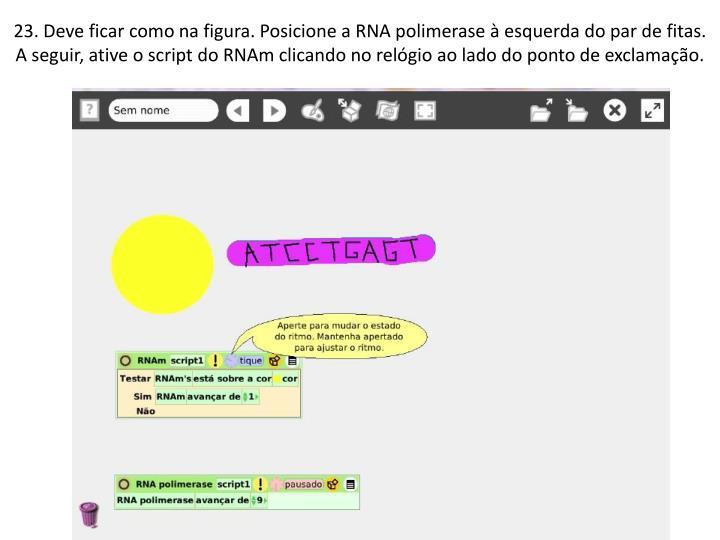 23. Deve ficar como na figura. Posicione a RNA polimerase  esquerda do par de fitas. A seguir, ative o script do RNAm clicando no relgio ao lado do ponto de exclamao.