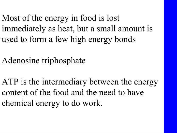 Most of the energy in food is lost immediately as heat, but a small amount is used to form a few high energy bonds
