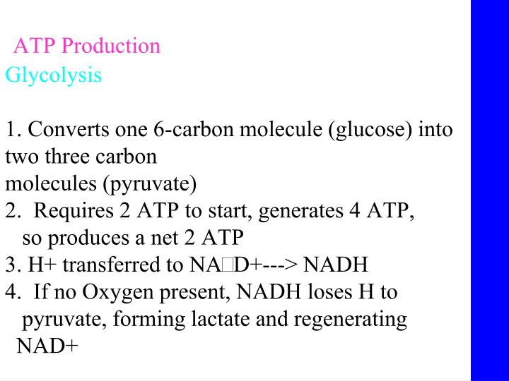 ATP Production
