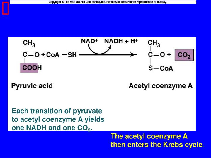 Each transition of pyruvate