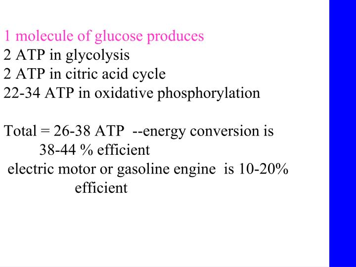 1 molecule of glucose produces