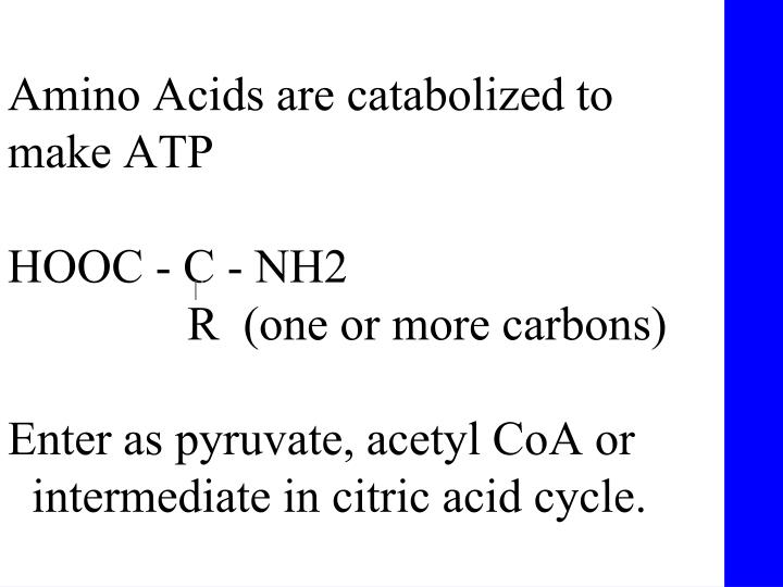 Amino Acids are catabolized to make ATP
