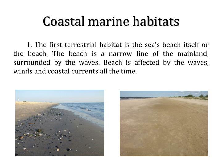 Coastal marine habitats