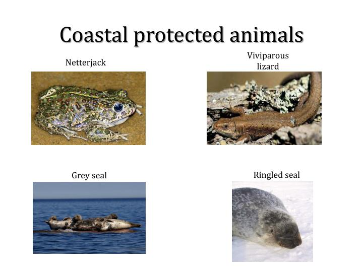Coastal protected animals