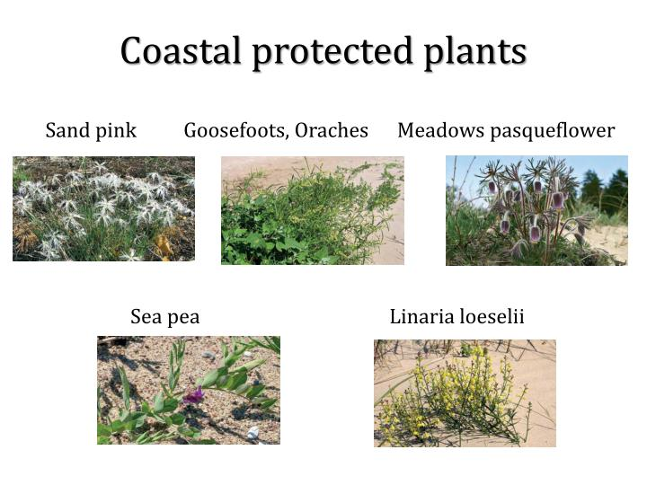 Coastal protected plants