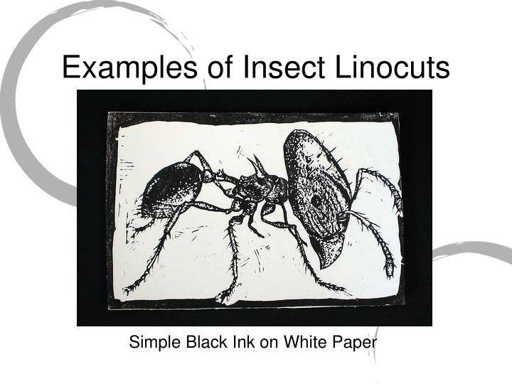 Examples of Insect Linocuts