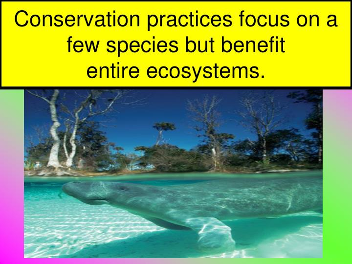 Conservation practices focus on a few species but benefit