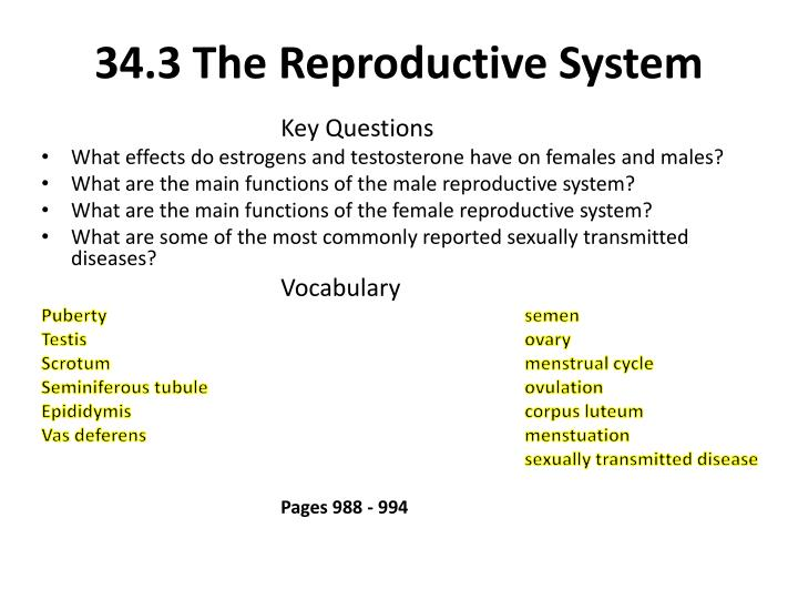 34 3 the reproductive system