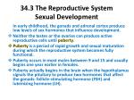 34 3 the reproductive system sexual development1
