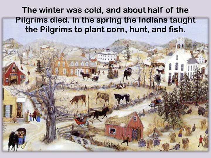 The winter was cold, and about half of the Pilgrims died. In the spring the Indians taught  the Pilgrims to plant corn, hunt, and fish.