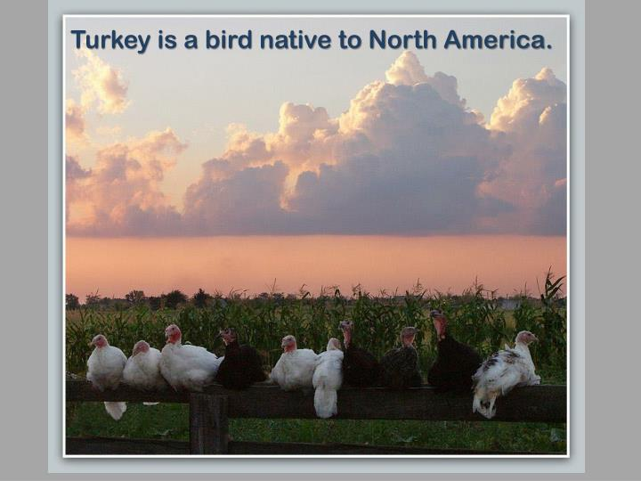 Turkey is a bird native to North America.
