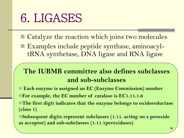 6. LIGASES