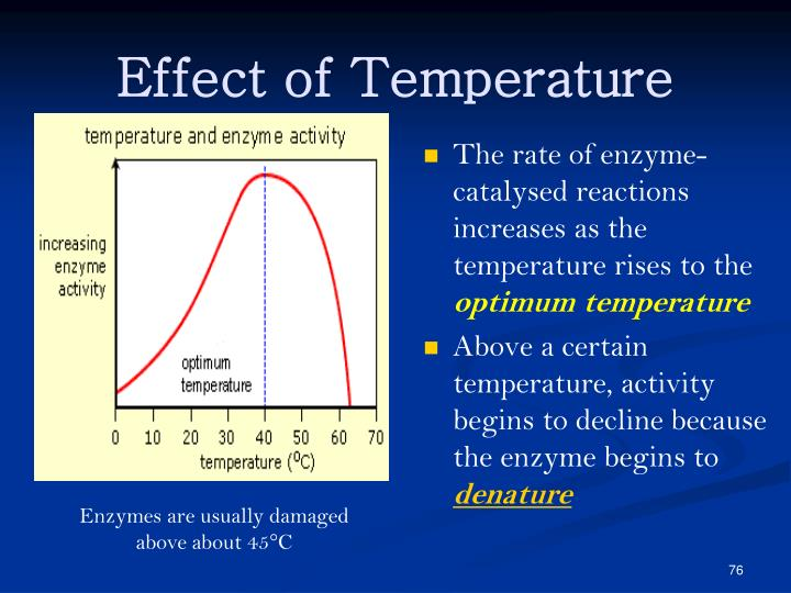 The rate of enzyme-catalysed reactions increases as the temperature rises to the