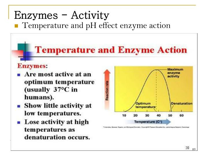 Enzymes - Activity