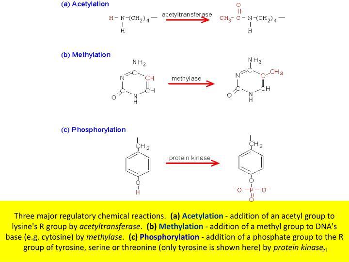 Three major regulatory chemical reactions.