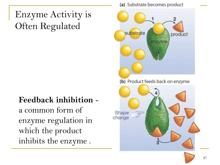 Enzyme Activity is Often Regulated