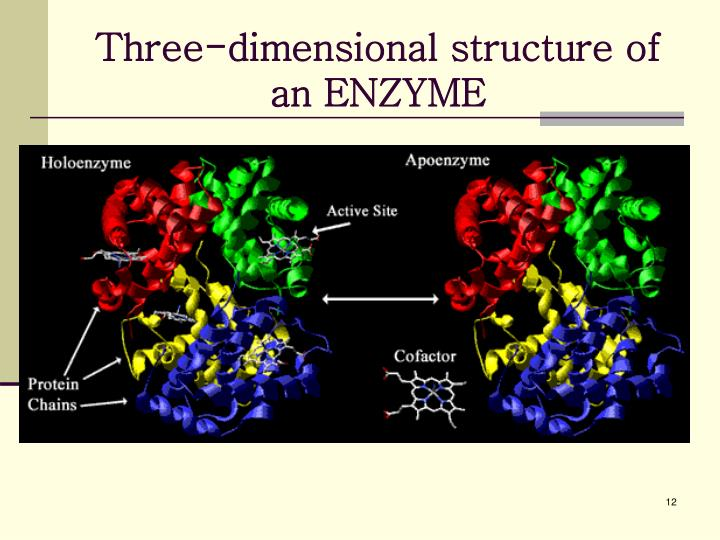 Three-dimensional structure of an ENZYME