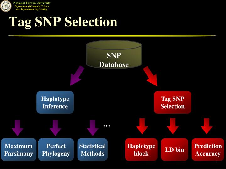 Tag SNP Selection