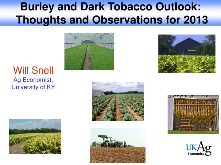 Burley and Dark Tobacco Outlook: