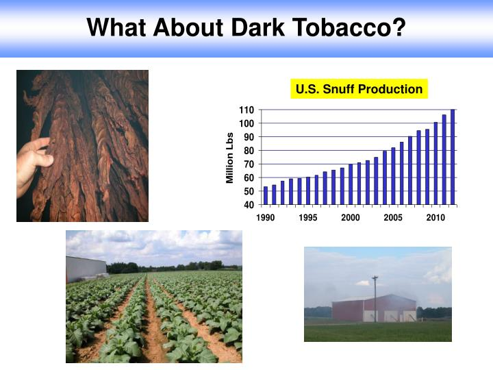 What About Dark Tobacco?