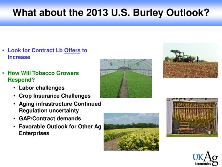What about the 2013 U.S. Burley Outlook?