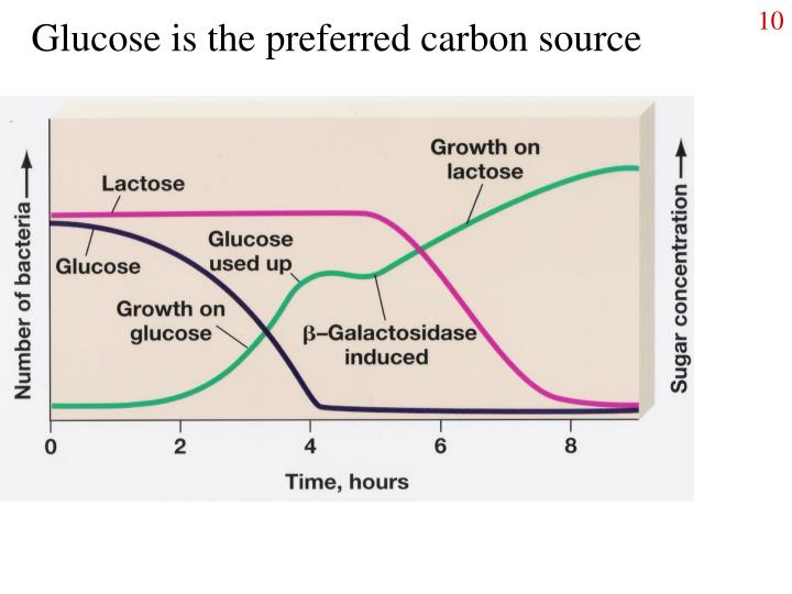 Glucose is the preferred carbon source