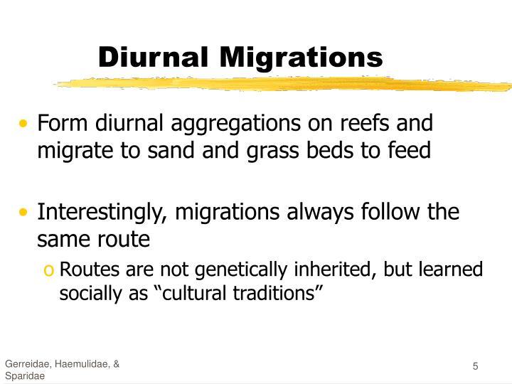 Diurnal Migrations