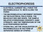 electrophoresis2