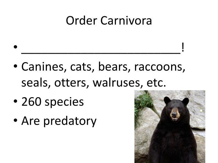 Order Carnivora