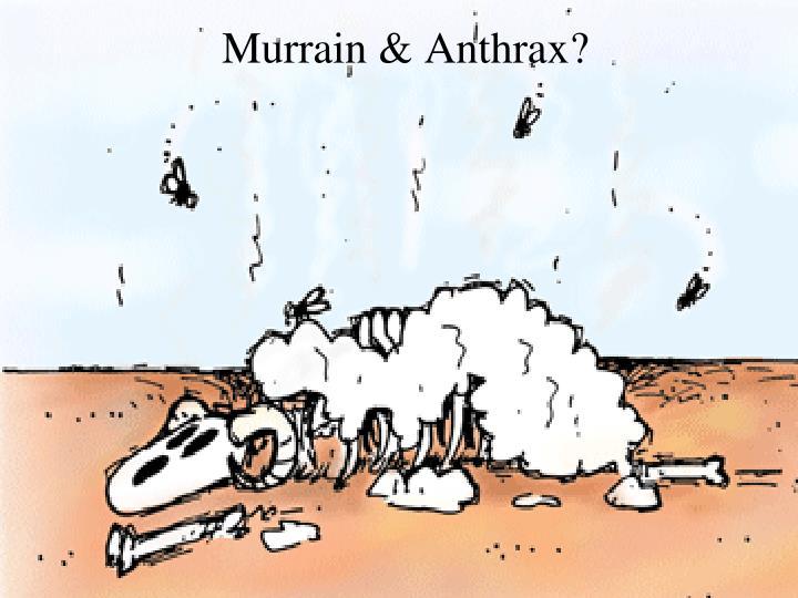 Murrain & Anthrax?