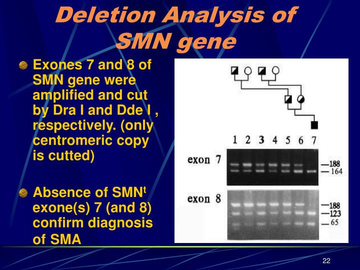 Deletion Analysis of SMN gene